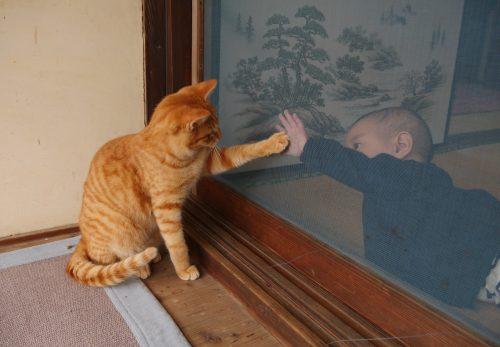 小学館web  Petomorrow「小林希の地球ネコ旅」