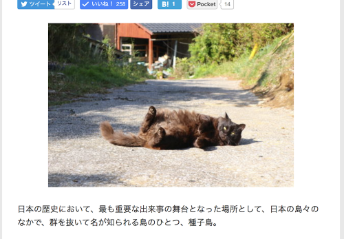 【種子島・前編】デジカメWatch掲載「カメラ旅女の全国ネコ島めぐり」公開しました
