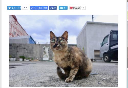 【与那国島編・前編】デジカメWatch掲載「カメラ旅女の全国ネコ島めぐり」公開しました