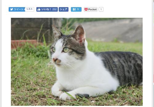 【与那国島編・後編】デジカメWatch掲載「カメラ旅女の全国ネコ島めぐり」公開しました