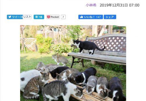 【猫宿あれこれ総集編】デジカメWatch掲載「カメラ旅女の全国ネコ島めぐり」公開しました